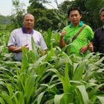 Jagung Konco untuk Petani dan Pesantren Berdaya