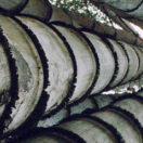 Bambu Sebagai Tanaman Konservasi